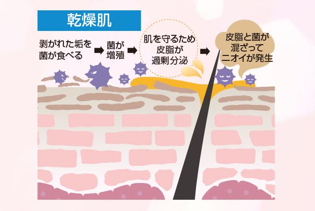 乾燥肌 剥がれた垢を菌が食べる→菌が増殖→肌を守るため皮脂が過剰分泌→皮脂と菌が混ざってニオイが発生