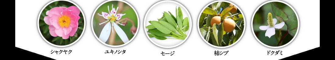 シャクヤク ユキノシタ セージ 柿シブ ドクダミ