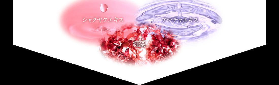 シャクヤクエキス アマチャエキス 紅藻