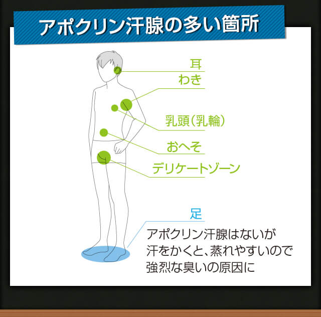 アポクリン汗腺の多い箇所