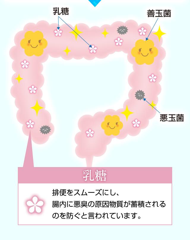乳糖 > 排便をスムーズにし、腸内に悪臭の原因物質が蓄積されるのを防ぐと言われています。
